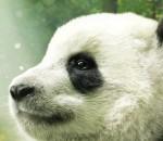 Pandas_IMAX