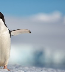 penguins_1