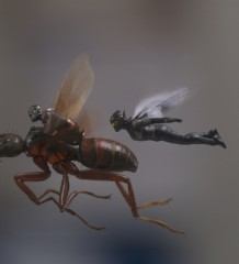 ants_wasp