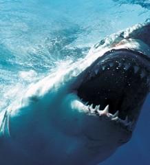 shark_weeks