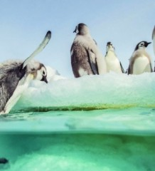 march_penguins2