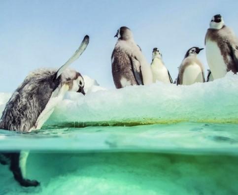 march_penguins2